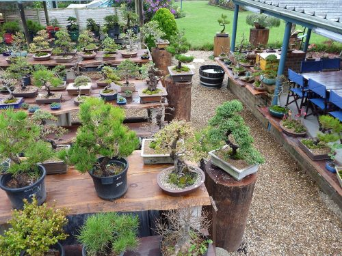 Our nursery at Woollamia, Shoalhaven