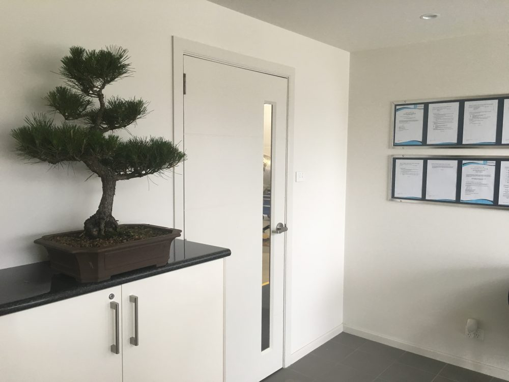 Bonsai Hire ideas for office spaces and reception areas.